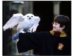 Harry Potter movie still: Daniel Radcliffe as Harry Potter